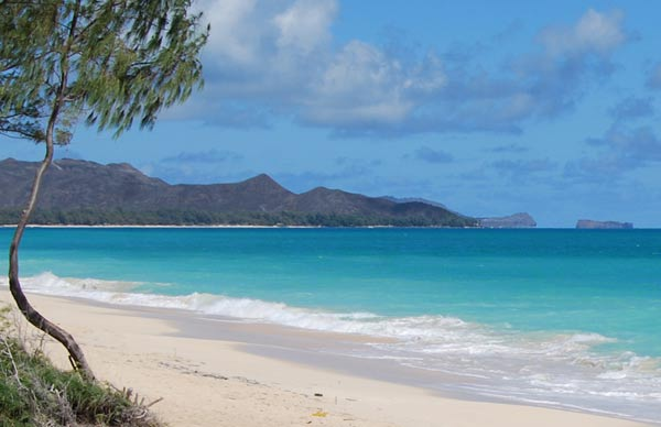 You Can't Go Wrong With A Private Beach in Hawaii for a Marriage Proposal!