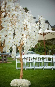 Manzanita-trees-and-white-orchids-weddings