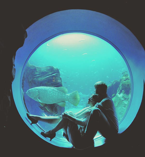 Georgia-Aquarium-Wedding-Photography---Katie-and-David-Engagement---Famous-William-Company-12