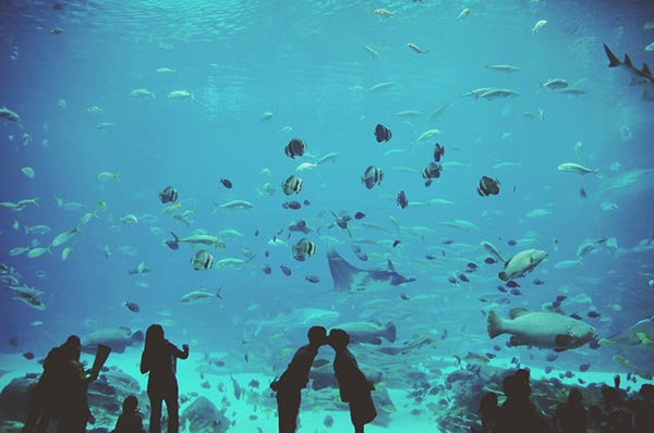 Georgia-Aquarium-Wedding-Photography---Katie-and-David-Engagement---Famous-William-Company-15